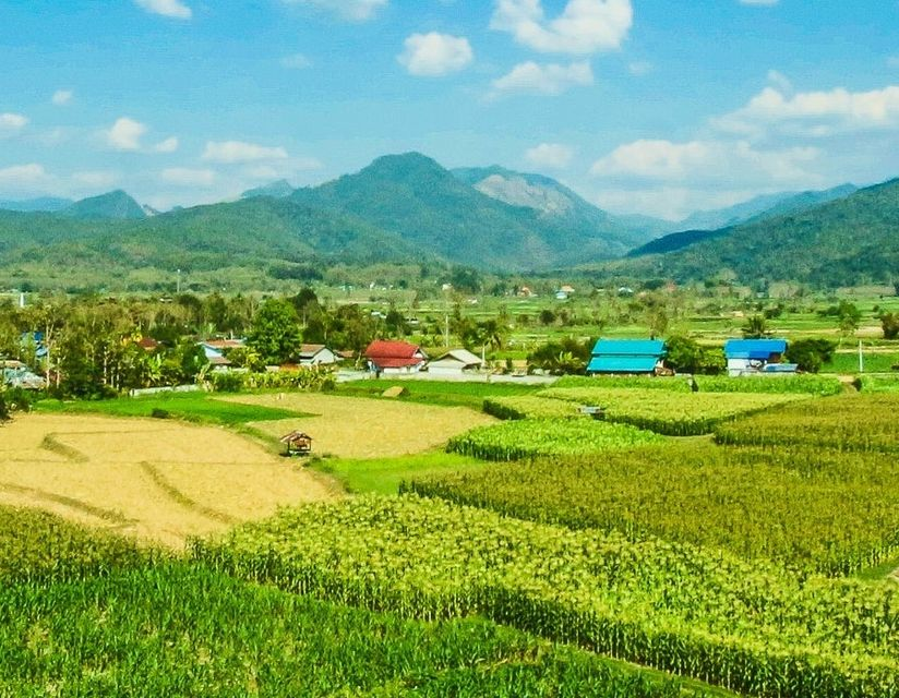 Best Thai Cooking Classes With Farm And Garden Tour In Bangkok Book Online Cookly
